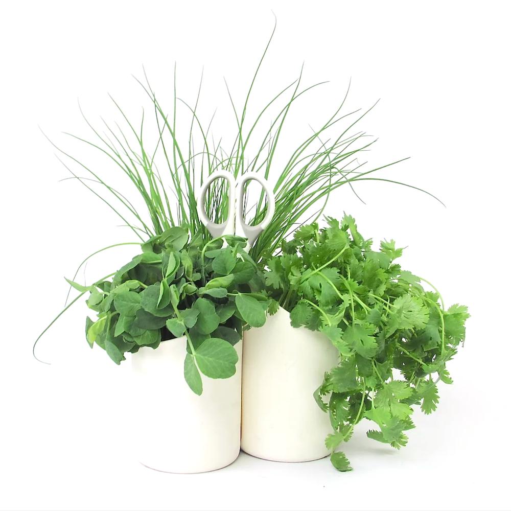 herbster cut3 hvid