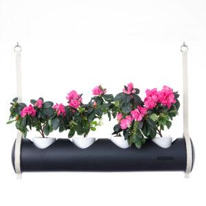 herbster tube black pink roses