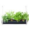 herbster tube black fresh herbs