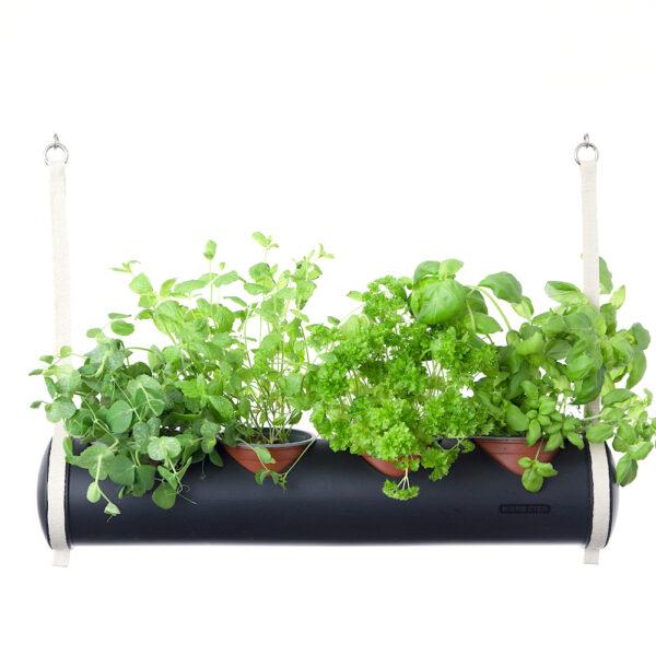 herbster tube black fresh herbs