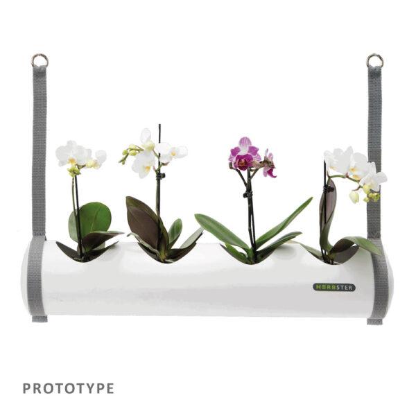 Herbster Tube hvid white orkideer