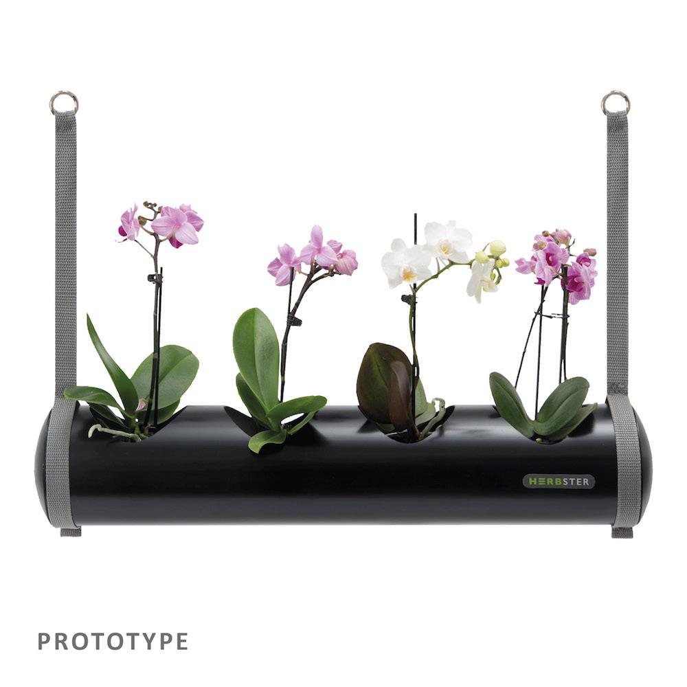 herbster tube sort black orkideer