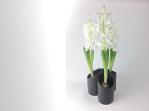 Pynt-med-hyacinter