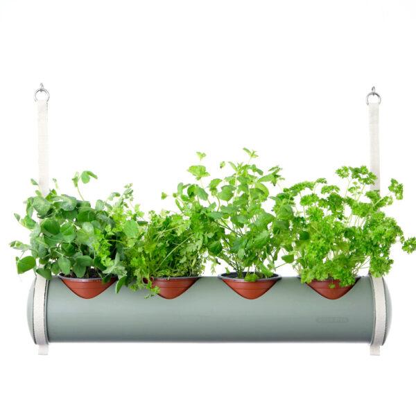 herbster tube botanic green herbs