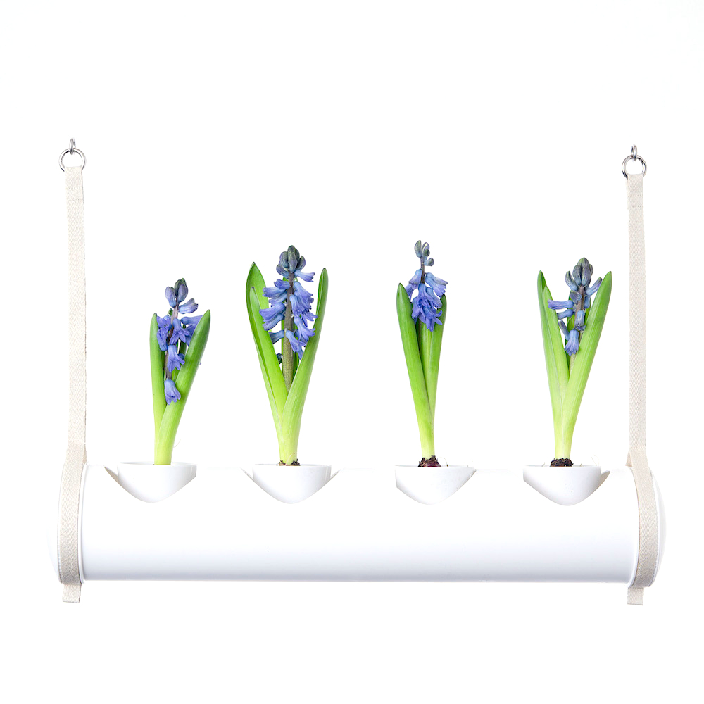 herbster tube white blue crocus