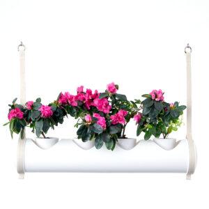 herbster tube white pink roses