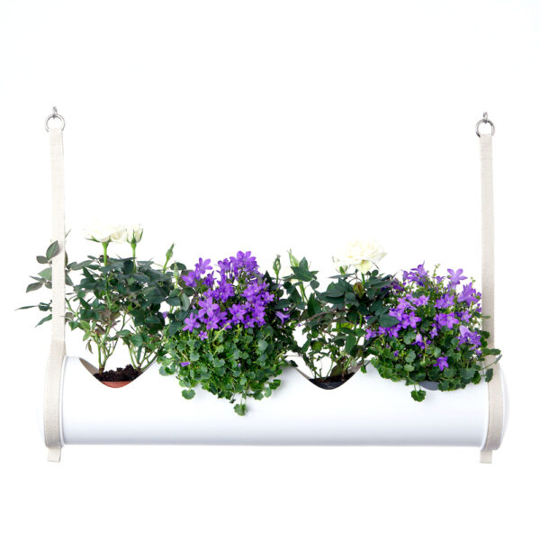 herbster tube white romantic garden